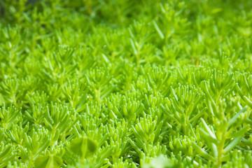 decorative plants cover macro shot