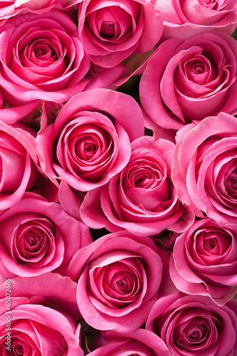 Fototapete beautiful pink roses background