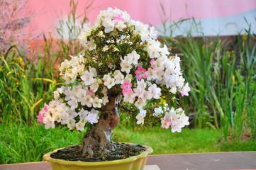 les fleurs des  floralies de nantes