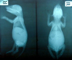 x ray picture of wild animal