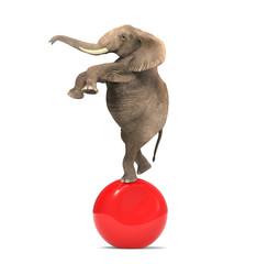 Elephant balancing on a big ball
