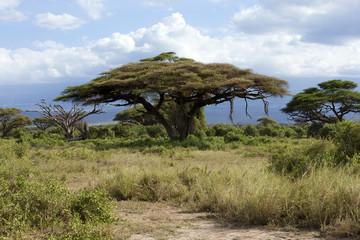 Savannah in  Kenya