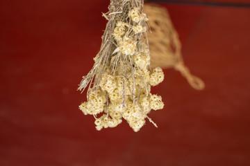 sample herbs drying in the sun