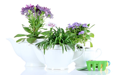 Flowers in decorative pots  with garden tools isolated on white