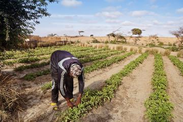 homme cultivant potager (Afrique)
