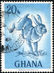 postage stamp with wild rabbit illustration