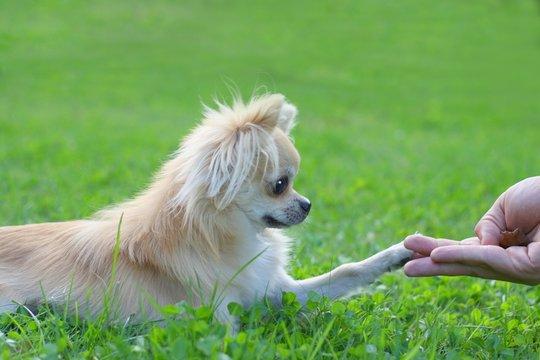 Dog touching a man's hand - shake paw trick