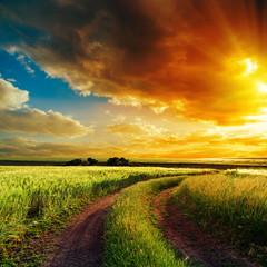 Fotobehang Platteland good sunset over winding road in field