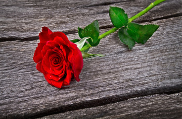 red rose on old wood