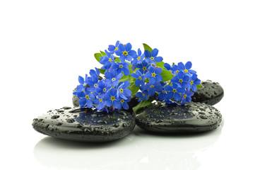Obraz Niezapominajka na kamieniach bazaltowych - fototapety do salonu