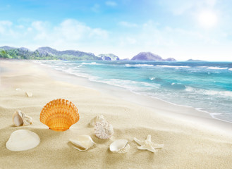 Landscape with shells on sandy beach.