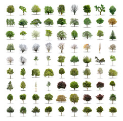 Pack of 81 different trees isolated on white background