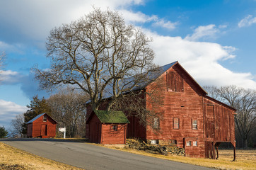 Old Red Barns and Tree on Country Road.