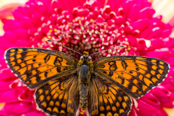 butterfly on a flower close-up