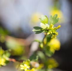 yellow flowers in nature. macro