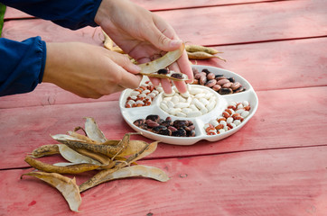 close female hands shell husk decorative bean pods