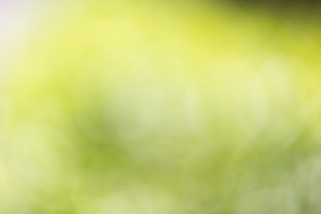 abstract bokeh background of nature