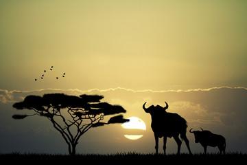 wildebeest in African landscape