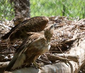 eagle on the nature