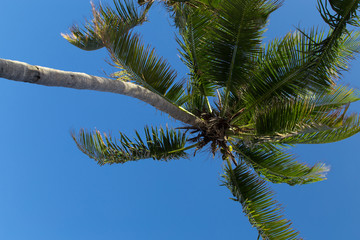 palm with sky