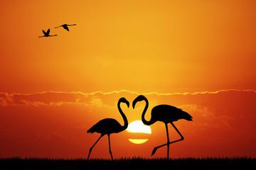 pink flamingos at sunset