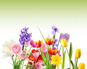 Fresh spring flowers on green background