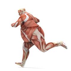 anatomy obese man running