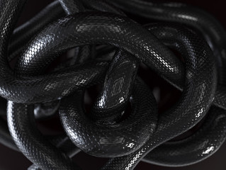 Black Snakes Abstract Background