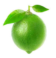 Isolated lime. One fresh lime fruit with leaves isolated on white background