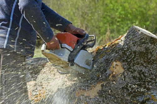stump grinding business plan