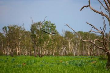 Fotoväggar - Adler in Australien im Flug