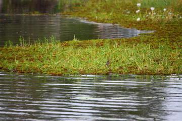 Fotoväggar - Vogel auf dem Wasser