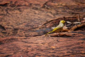 Fotoväggar - kleiner gelber Vogel