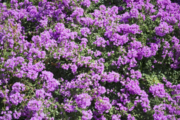 Close-up flowers background.