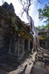 Prasat Ta Prum. Roots Of Tree.