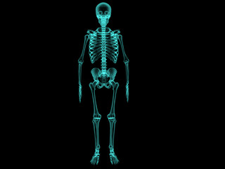 X-ray human bones . №1