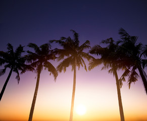 Coconut palms is  in tropic on sunset background