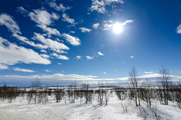 Sunny winter day in Scandinavian tundra