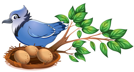 A blue bird at the branch of a tree with a nest