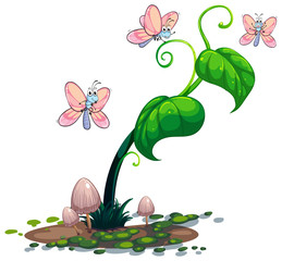 A green plant with butterflies