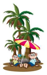 Monkeys under the coconut trees