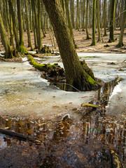 Schneeschmelze im Nationalpark Jasmund auf Rügen