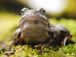 Frosch im Nationalpark Jasmund