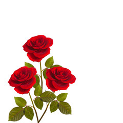 three red roses on stems with leaves bunch