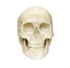 Skull isolated against white