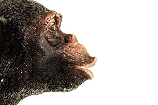 Ape profile