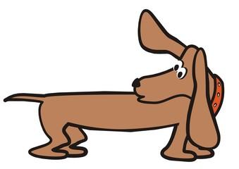 dog-dachshund