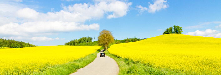 Photo sur Plexiglas Jaune Way to the rape field