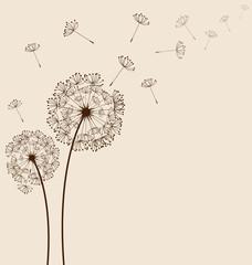 Dandelions background vector