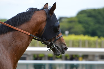 chevaux de course